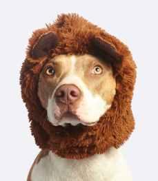 dog with brown faux fur headband